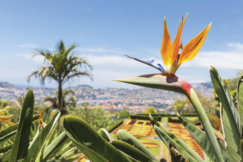 http://extranet.jetlinetravel.info/express-images/express_QuintadoEstreito_Madeira_4.jpg